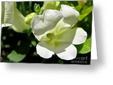 Snapdragon From The Mme Butterfly Mix Greeting Card
