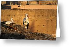 Storks In Marrakech Greeting Card