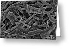 Thermophile Bacteria Greeting Card