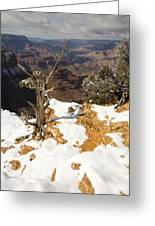 Winter Time On The South Rim Greeting Card