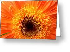 6135 Greeting Card