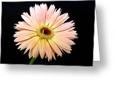 61683a Greeting Card