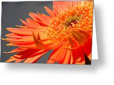 6192-011 Greeting Card