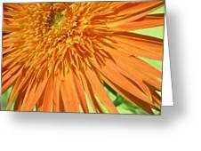 6224-1 Greeting Card