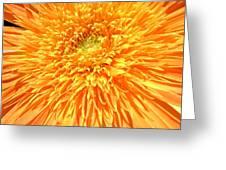6226c Greeting Card