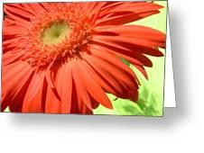 6244c-001 Greeting Card
