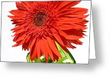 6311 Greeting Card