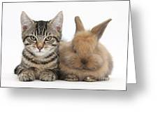 Kitten And Rabbit Greeting Card