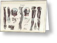 Anatomie Methodique Illustrations Greeting Card
