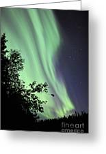 Aurora Borealis Above The Trees Greeting Card