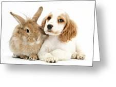Cocker Spaniel And Rabbit Greeting Card