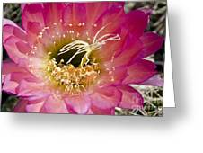 Dark Pink Cactus Flower Greeting Card