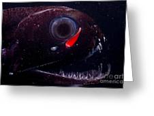 Dragonfish Greeting Card