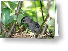 Gray Catbird Greeting Card