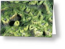 Hard Coral Greeting Card
