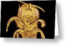 Honey Bee, Sem Greeting Card
