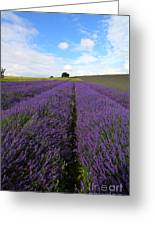 Lavenders Greeting Card