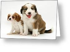 Puppies Greeting Card by Jane Burton