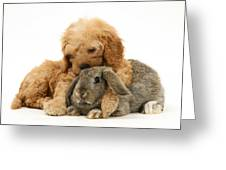 Puppy And Rabbit Greeting Card