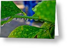 Raindrops On Leaf Greeting Card