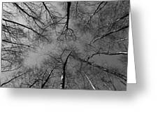 Trees In Epping Forest Greeting Card