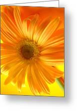 7321-002 Greeting Card