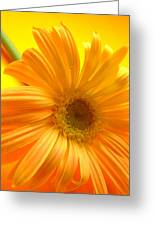 7321-007 Greeting Card