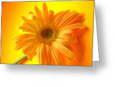 7321-009 Greeting Card