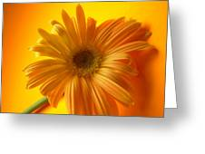 7321 Greeting Card