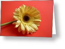 7696 Greeting Card