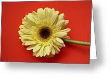 7709 Greeting Card