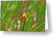 8- Dragonfly Greeting Card