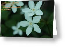 Flowers For You Greeting Card