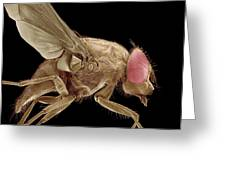 Fly, Sem Greeting Card