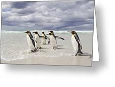 King Penguin Aptenodytes Patagonicus Greeting Card
