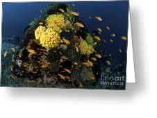 Reef Scene With Coral And Fish Greeting Card
