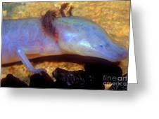 Texas Blind Salamander Greeting Card