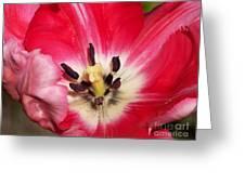 Tulipe Greeting Card