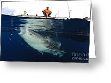 Whale Shark Feeding Under Fishing Greeting Card