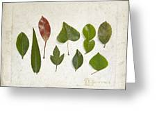 9 Leaves Greeting Card