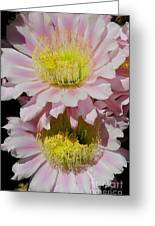 Pink Cactus Flowers Greeting Card