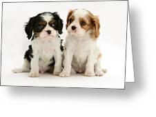 Puppies Greeting Card by Jane Burton