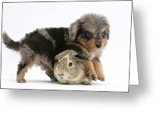 Puppy And Guinea Pig Greeting Card