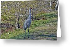 9- Sandhill Crane Greeting Card