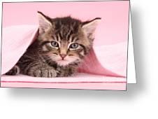 Tabby Kitten Greeting Card