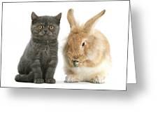 Kitten And Rabbit Greeting Card