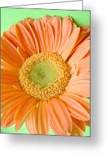 93721a1 Greeting Card