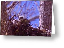 A Baby Red Tail Gazing From Its Nest Greeting Card