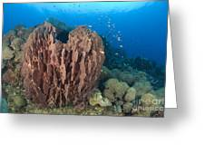 A Barrel Sponge Attached To A Reef Greeting Card