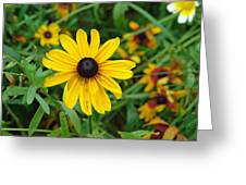 A Beautiful Close Up Of A Sunflower Greeting Card